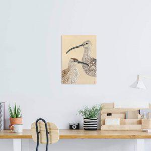 Courlis cendré – Courlis corlieu