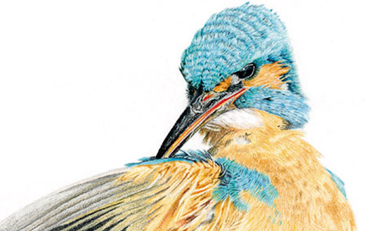 Martin pêcheur, exemple de mon évolution artistique