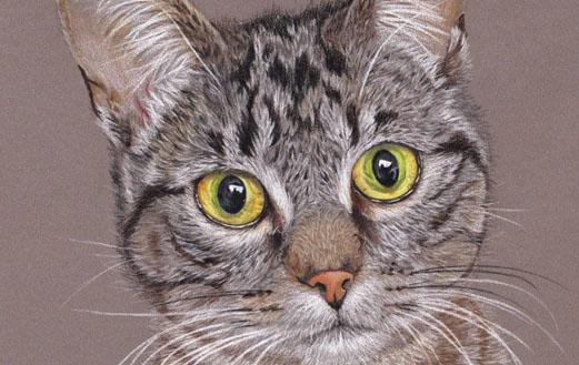 Taïga, portrait d'une jolie chatte