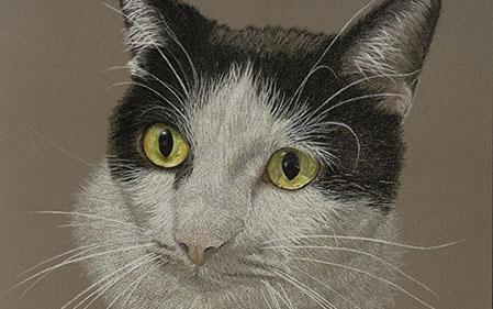 Hooper, Le chat noir et blanc