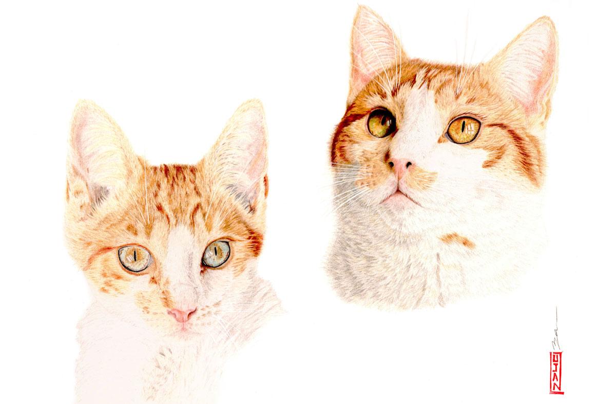 Léo, mon amour de chat
